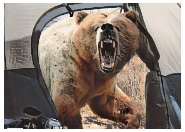 催涙スプレーで熊を撃退