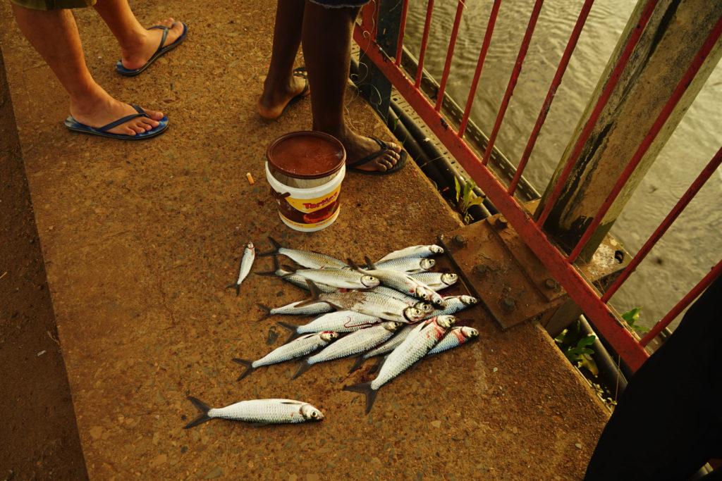大量の川魚が獲れた
