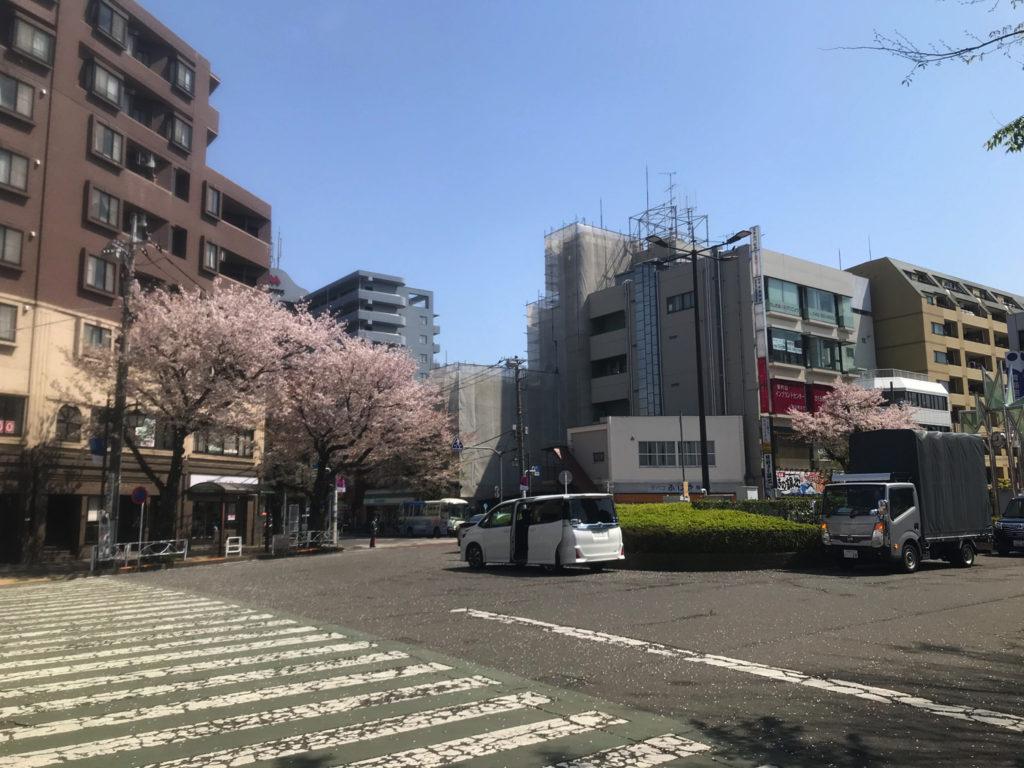 散りゆく桜に志村さんを重ねる