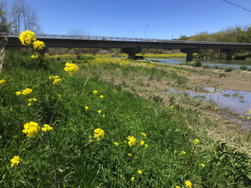 学校橋河原の春