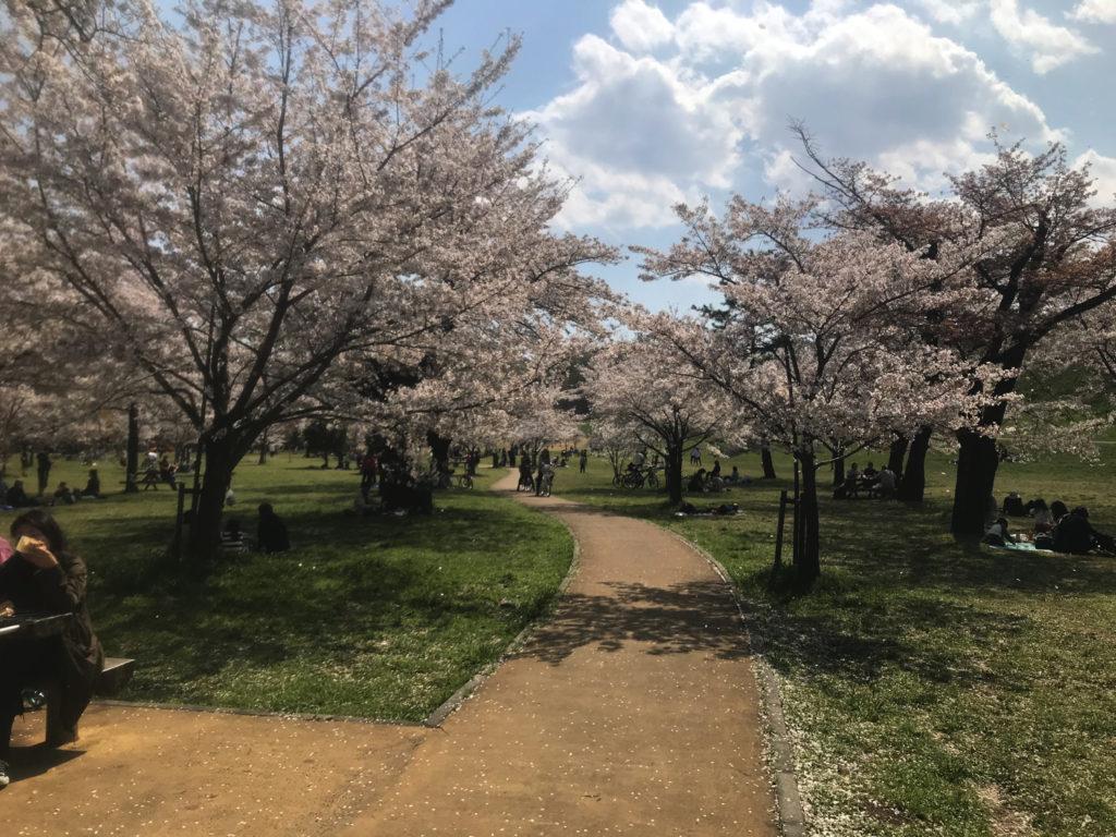 散りゆく桜達