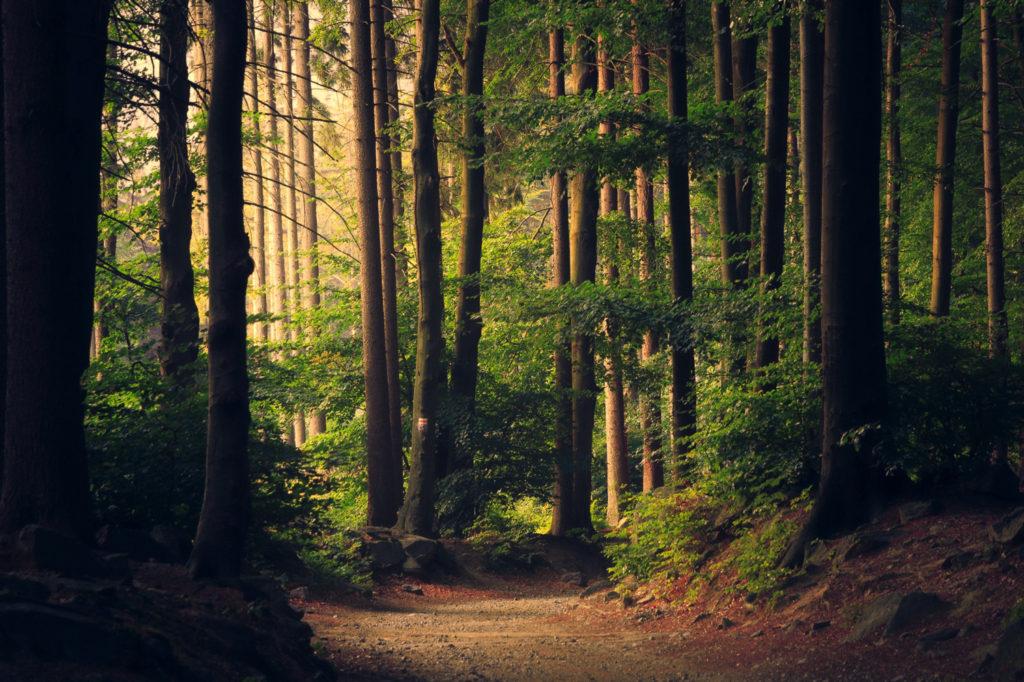 山林を国有と私有に見分けるのは不可